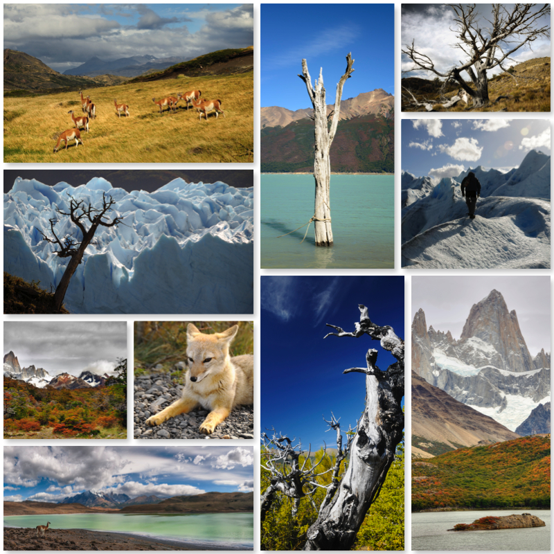 My Trip to Argentina and Patagonia